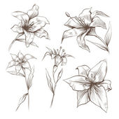 Hand drawn lilly flowers vector set — Stok Vektör