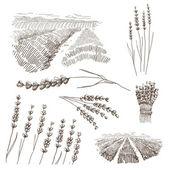 Hand drawn lavander flowers vector set — Stock Vector