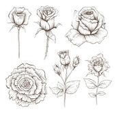 Hand drawn rose flowers vector set — Stock Vector