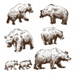 Hand drawn bear set — Stock Vector