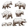 Hand drawn bear set — Stock Vector