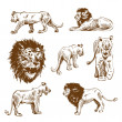 Hand drawn lion set — Stock Vector