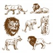 Hand drawn lion set — Stock Vector #27866871