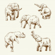 Hand drawn elephant set — Stock Vector #27866997