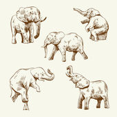 Hand drawn elephant set — Stock Vector