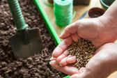 Seeds For Planting in Gardener's Hands - Ready for Spring — Stock Photo