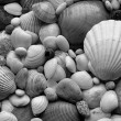 Sea Shells Seashells! - scallop and assorted shells / pebbles — Stock Photo