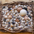 Seashells, Sea Shells! Variety with pebbles, driftwood and stone - Stock Photo