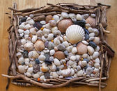 Seashells, Sea Shells! Variety with pebbles, driftwood and stone — Stock Photo