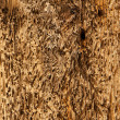 Abstract Driftwood Background Texture - worn, battered, natural — Stock Photo