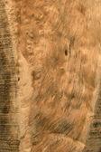 Ahşap tahıl soyut ve arka plan doku doğa. — Stok fotoğraf