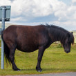 Horse humor - cross pony scratches ass on signpost - waiting for bus...?! - Stock Photo