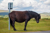 Horse humor - cross pony scratches ass on signpost - waiting for bus...?! — Stock Photo
