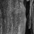 Hollow Tree. - Stock Photo