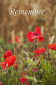 Remember - for Rememberance Day - Wild Poppies — Stock Photo