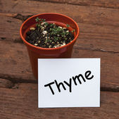 Thyme seedlings in plant pot, with herb name on card. — 图库照片
