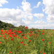Corn Poppy Landscape — Stockfoto