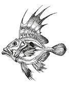 Fabe zeus, pescado, pez luna — Vector de stock