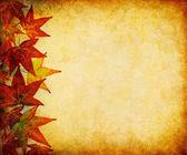 Fall Leaf Margin — Stock Photo