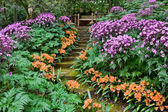 Santa Barbara Flower Garden — 图库照片