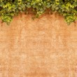 Stock Photo: Vintage Ivy wall
