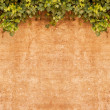 Vintage Ivy wall - Stock Photo
