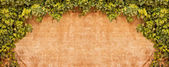 Vintage Ivy wall — Stock Photo