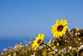 Ocean Flowers — Stock Photo