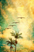Retro Palms and Pelicans — Stock Photo