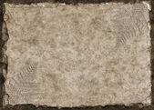 Fern Fossils — Stock Photo