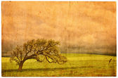 Old Oak Postcard — Stock Photo