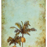 Постер, плакат: Vintage Palm Postcard