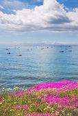 Santa Barbara Anchorage and Flowers — Stock Photo