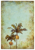 Vintage Palm Postcard — Stock Photo