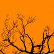 Halloween Tree — Stock Photo #16796065