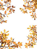 Autumn Leaves on White — Stock Photo