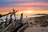 Sunset Jogger — Stock Photo