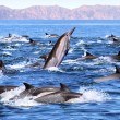 Dolphin Patrol — Stock Photo #16969695