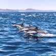 Five Jumping Dolphins — Stockfoto #16969985