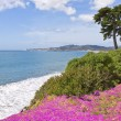 Coastal Flowers - Stock Photo