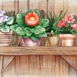 Stock Photo: Flower shelf
