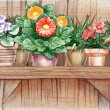 Flower shelf — Stock Photo #42046287