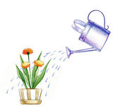 Watering the flower — Stock Photo