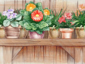 Flower shelf — Stock Photo