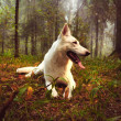 Stock Photo: White dog in forest