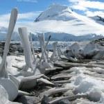 Antarctica — Stock Photo #28417601