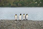 Pinguins — Fotografia Stock