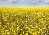Kwiat pole wiosną — Zdjęcie stockowe