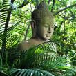 Buddha — Stock Photo #34224985