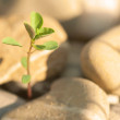 Little Plant on Stones - Stock Photo